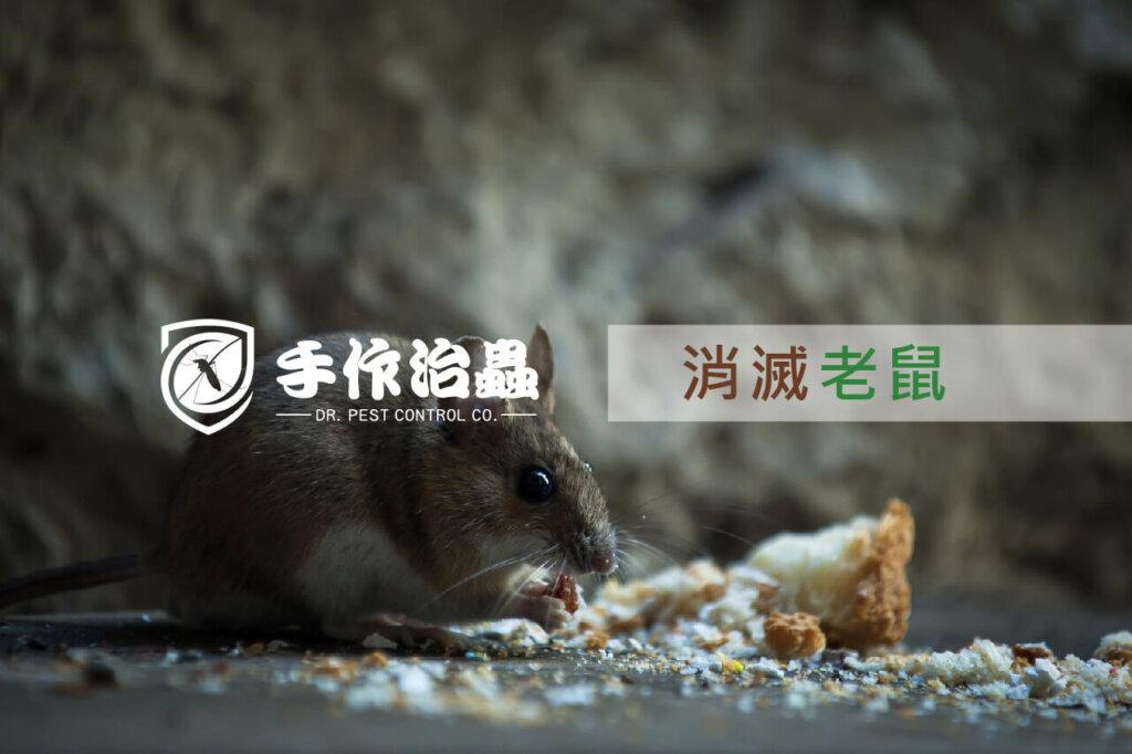 除鼠, 消滅老鼠, 滅鼠公司