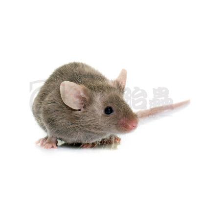 滅蟲服務, 除鼠