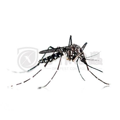 滅蟲服務, 滅蚊