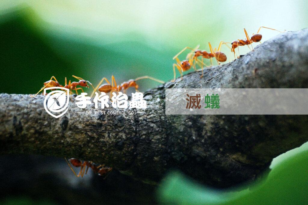 滅蟻, 天然滅蟻, 手作治蟲滅蟻公司