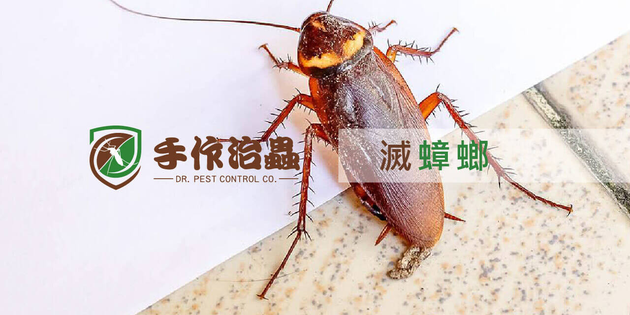 滅蟑螂, 天然滅曱甴方法, 手作治蟲除蟲公司